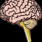 当院の治療の特長。脳に刺激を送る治療とは?