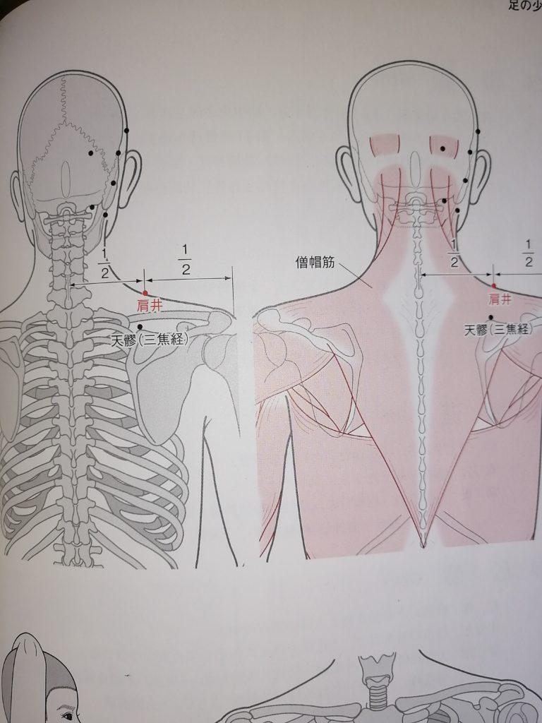 肩井ツボの説明